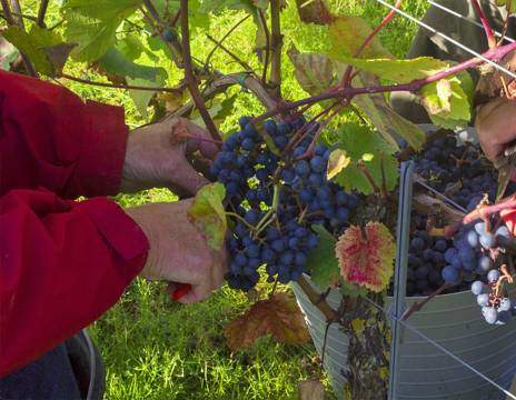 Oplev en dansk vingård hos MODAVI