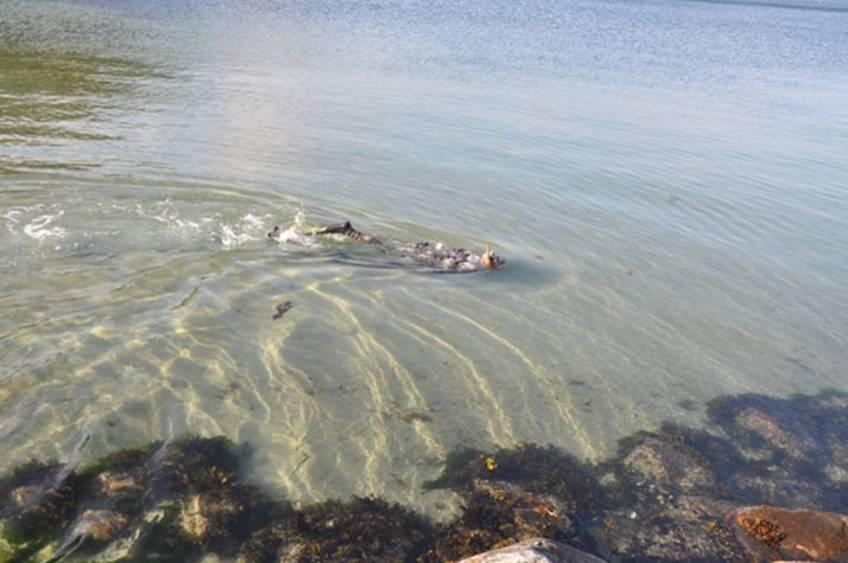 undervandsjagt kursus fyn