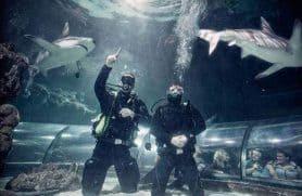 Big Shark Dive I Kattegatcentret