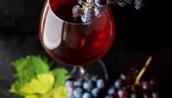 Se På Vinen