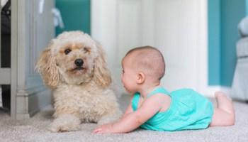 Babyshower Gaver Til Pige