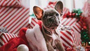 Julegaver Til 14 Årige