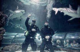 Big Shark Dive