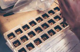 Chokoladekursus Lav Dine Egne Fyldte Chokolader
