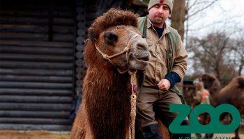 Dyrepasser For En Dag Københavns Zoo