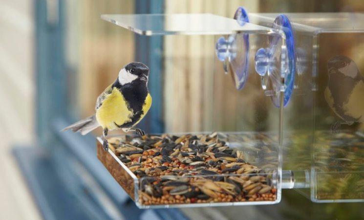 Fuglefoderbræt Til Vinduet