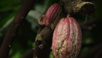 Peter Beiers Chokoladebrunch