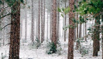 aktiviteter vinterferien
