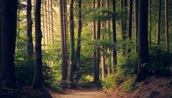 naturoplevelser fyn