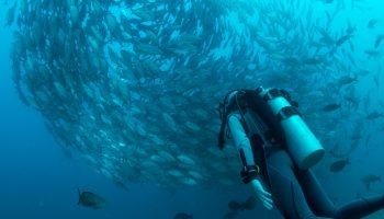prøve dyk