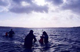 østerssafari limfjorden